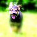Dog Lead at the 15th Prasad