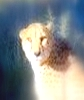 Leopard Leads The Eighth Prasad