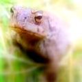 Toad Leads The Ninth Prasad