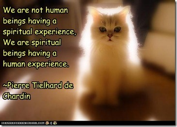 nothumanscat