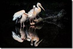 wild,life-ded32018be540c70f15f8a93ffee0af7_h