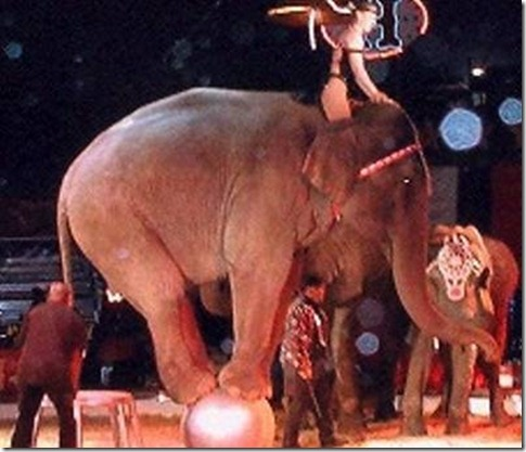 elephantperformingincircus1