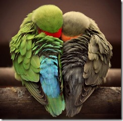 love,birds,d,_,b,dream,happiness,love,sleep-04285a5dbd7c39953af60c7799a0727e_h