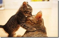animals,cute,cat,happiness,joy,kiss-78a3ce53d1d4f155b6c0b24a896c2ea1_h