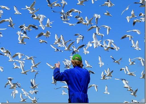 birds3dexperiencelife