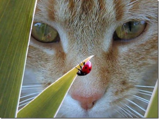 cat,face,ladybug,plant,up,close,animales-65252e8416964e9371d406d86c07967c_h