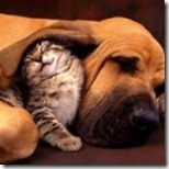 Cat-and-Dog-150x150 (2)