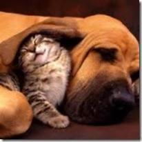 Cat-and-Dog-150x150 (3)