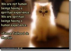 nothumanscat_thumb