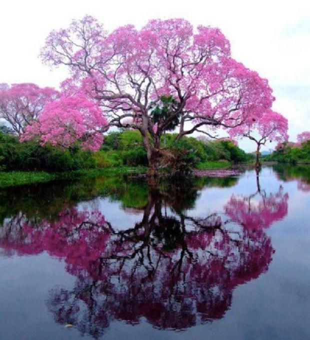 matter-reflects-mind