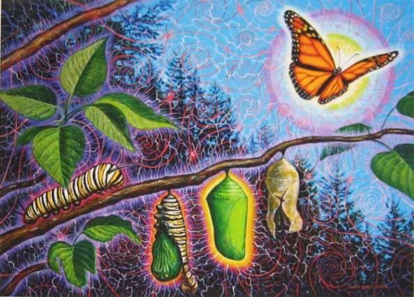 butterfly-625x448