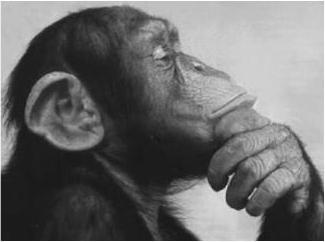 monkey-thinking