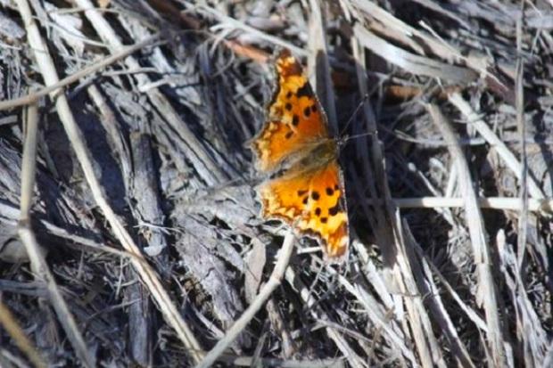 poignant-butterfly-rhonda-depalma