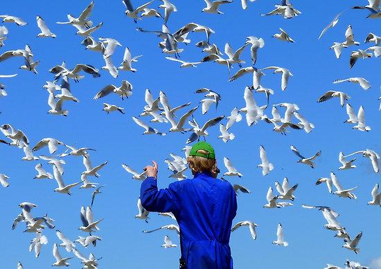 work.6391737.2.flat,550x550,075,f.experience-life-in-3d-seagulls-nz