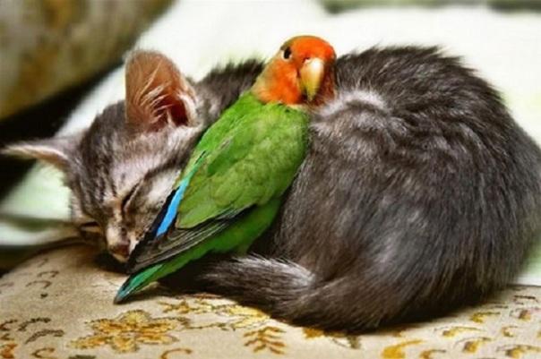 d_bbirdcatcatscutefriendship-bfaa427e0efe3de864e63130c3f40e12_h