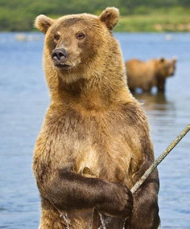 bear instinct crppd